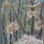 Redwood trees, 1991