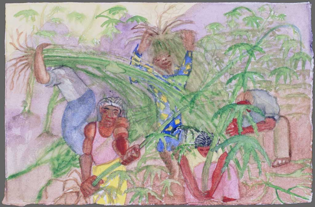 Harvesting the plants, 1993